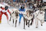 Nordic Reindeer Racing Championship Photographic Print by Espen Bergersen