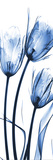 Three Blue Tulips Posters by Albert Koetsier