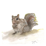 Backyard Squirrel Prints by Beverly Dyer