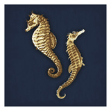 Seahorse Navy Art by Jace Grey