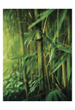 Bamboo Zen Art