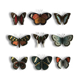 Floating Butterflies Posters by Jace Grey