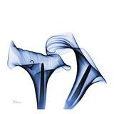 Calla Lilies Indigo Prints by Albert Koetsier