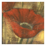 Poppie in The Gold Prints by Linda Davey