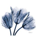 Tulips Indigo Print by Albert Koetsier