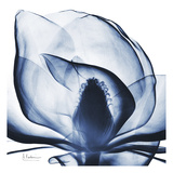 Magnolia Indigo Poster von Albert Koetsier