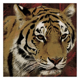 Tiger Streaks Print by Jace Grey