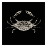 Coastal Crab 3 Prints by Victoria Brown