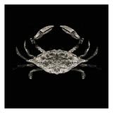 Coastal Crab 3 Prints by Victoria Brown