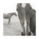 Foal and I Prints by Heather Johnston