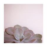 Desert Flora 2 Art by Susannah Tucker