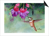 Hummer and Pink Fuchsias Posters by Julie Peterson