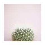 Desert Flora 3 Posters by Susannah Tucker