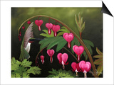 Hummer and Bleeding Hearts Prints by Julie Peterson