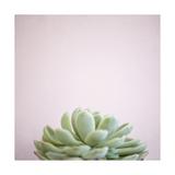 Desert Flora 1 Posters by Susannah Tucker