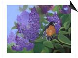 Lilacs Robin Posters par Julie Peterson