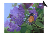 Lilacs Robin Posters by Julie Peterson