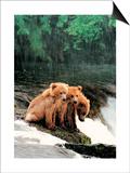 Rain Bears Posters by Gary Crandall