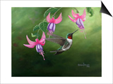 Rufous and Fuchsias Poster by Julie Peterson