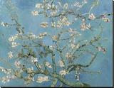 Almond Blossom, 1890 Reproduction sur toile tendue par Vincent van Gogh