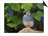 Quail Grapes Print by Julie Peterson