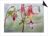 Columbine and Hummer Print by Julie Peterson