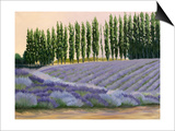 Greysmarsh Lavender Print by Julie Peterson