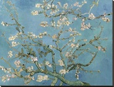 Almond Blossom, 1890 Stretched Canvas Print by Vincent van Gogh