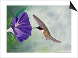 Morning Glory and Anna Prints by Julie Peterson