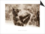 Yoga Bear Poster by Gary Crandall