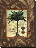 Date Palm Stretched Canvas Print by Karl Rattner