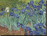 Irises in the Garden Lærredstryk på blindramme af Vincent van Gogh