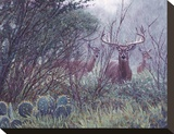 Lone Star Whitetail Stretched Canvas Print by John Banovich