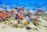 Underwater World with Corals and Tropical Fish. Lámina fotográfica por Brian K