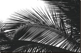 Palms 13 Stretched Canvas Print by Jamie Kingham