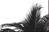 Palms 2 Stretched Canvas Print by Jamie Kingham