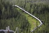 Alaska Oil Pipeline Photographic Print by raymona pooler