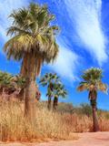 Desert Palm Oasis Phoenix Arizona Photographic Print by Charles Harker