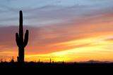 Desert Sunset with Saguaro Cactus Photographic Print by Christina E
