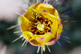 Blooming Desert Cactus Photographic Print by  wollertz