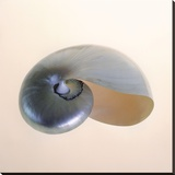 Polished Nautilus Stretched Canvas Print by Tom Artin