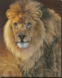 Power and Presence - African Lion Stretched Canvas Print by Joni Johnson-godsy
