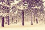 Winter Forest Vista Fotografisk tryk af  duallogic