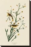Yellow Red-Poll Warbler Stretched Canvas Print by John James Audubon