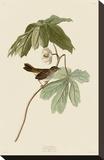 Swamp Sparrow Stretched Canvas Print by John James Audubon