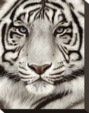White Tiger Face Portrait Stretched Canvas Print by Rachel Stribbling