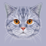 Illustration of Portrait British Short Hair Cat. Cute Grey Tabby Domestic Cat with Orange Eyes. Prints by  ant_art19