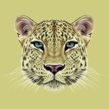 Illustrative Portrait of Leopard. Cute Face of African Leopard with Blue Eyes. Prints by  ant_art19