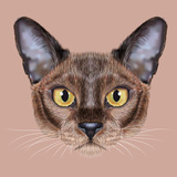 Illustrated Portrait of Burmese Cat. Posters by  ant_art19