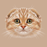 Illustration Portrait of Scottish Fold Cat. the Cute Tabby Peach Cat with Green Eyes. Prints by  ant_art19